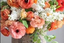 Botanical Inspiration / Everything floral, leafy, &/or woodsy / by Elise Buhn