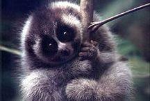 Cute baby animals - aww