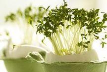 Zahrada, rostliny, byliny