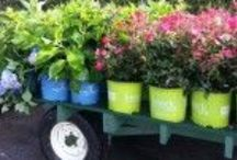 The Garden Center! / New products, services & more!