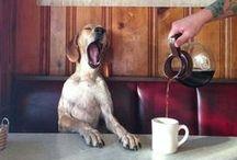 Coffee / by Ashley Mosebey