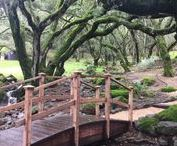Sonoma County / Travel and explore Sonoma County in Northern California - restaurants, wineries, and hiking.