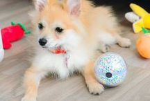 Smart Toys and Gadgets for Pets / Pet toys and gadgets are getting smarter. Recent introductions to pet toys and gadgets equipped with technological capabilities now make playing with and caring for your pet extra fun and convenient.