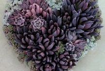 Succulents / I've always loved succulents and am eager to plant a container featuring them! Gathering ideas for indoor and garden containers.  So many types, tips, ideas and how to info! Goal 9 on my 101 in 1001 Days Goal List - to read more see: http://agingandmore.com/101-in-1001-days-list-goals/
