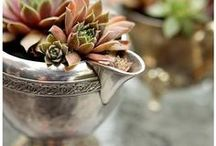 Vintage Planters for Succulents / Creative, DIY ideas for planting succulents. Vintage and antique tea pots, sugar bowls, collanders, tea cups, all look amazing with succentent arrangements!  Repurposing old junk to make beautiful vintage planters, centerpieces and patio decor!