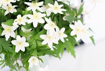 Kukkia kotiin