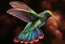 Birds...I love them! / by Cory Blyth