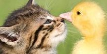 Furever Friends / Furry, scaly, cuddly friends