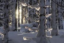 Winter / by chaney ogletree