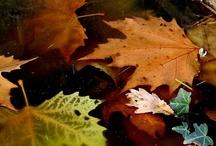 Autumn! / by chaney ogletree