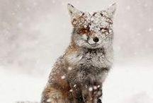 ♡ Winter