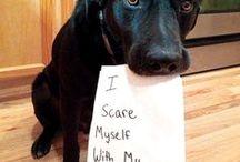 Pet Shaming !