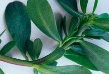 Eatable plants