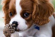 cachorinhos / sobres animais fofos e lindos