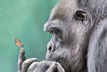 Animals  / Wunderschöne Tiere durch Fotografien oder Zeichnungen in scene gesetzt