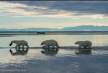 Alaska / by Vicki McMahan