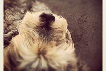 All Thing Pets / by T H i R D -i- P H O T O