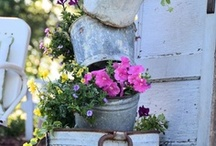 Gardening In Containers / by Pam J
