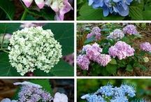 How To Grow Flowers & Plants | Gardening / Gardening tips on how to grow flowers, vegetables, fruits and other types of plants.  Check out our tips for growing Hydrangeas, Cucamelons, Ginger, Lavender and much more.