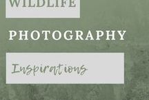 Wildlife Photography Inspirations / Images of Wildlife, mostly taken by me, Pixels by Tina.