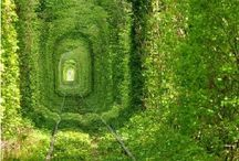 Down The Garden Path / by Jools