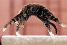 Gymnastics pets