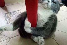 ネコ / たくましあい