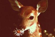 sweet baby animals / by misschrissyf