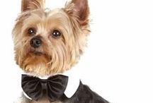 Entirely Pets Fashion Boutique / Pet fashion and apparel is important to anyone with a pet; being stylish isn't just important to humans, it's important to pets too.  / by EntirelyPets.com