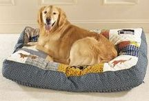 Dog Beds / by EntirelyPets.com