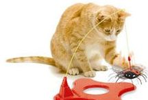 Entirely Fun Cat Toys / Check out some of these toys to keep your feline entertained.