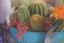 Plant and Garden Gift Ideas / www.evermine.com