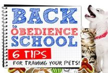 Training & Behavior / Training your pet to develop good habits has become easier in the past decade. Pet product producers have developed some of the most ingenious training products any have ever seen. From the basics to products made for specific purposes, your pet will be trained in no time! / by EntirelyPets.com
