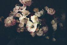flora / by Elizabeth Hotlen