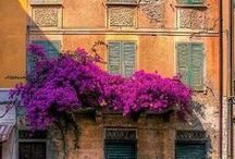 Bougainvillea / The flowers of the south! / by Esther van Gerwen