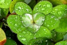 ∞ Ireland ☘ ∞ / May the road rise to meet you, May the wind always be at your back, May the sun shine warm upon your face, May the rains fall softly upon your fields ...  Irish blessing / by Diana Drent