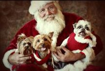 Entirely Christmas Pets / Great gifts and treats for the holidays for the pet lovers on your list / by EntirelyPets.com