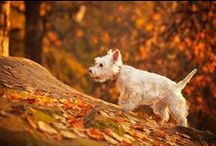 Entierly Autumn Pets / by EntirelyPets.com