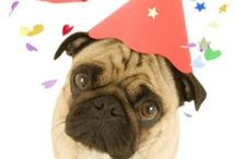 New Years Pet Countdown / by EntirelyPets.com
