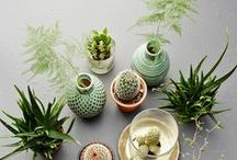 Houseplants with Bobby Pathammavong
