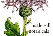 NEWS from Thistle Hill Botanicals / Stay in touch....Special Offers will be posted on this board along with new product info! / by Thistle Hill Botanicals