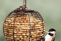 Bird Food & Bird Houses / How to attract Birds into your backyard, year round