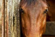 horses, horses, horses / by Marla Curtin