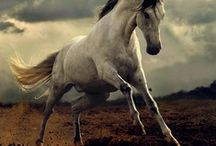 Horses beautiful magnifcent animals / by Judy