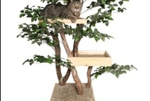 Home Decor for the Furry Family / by Darleen Jehnsen