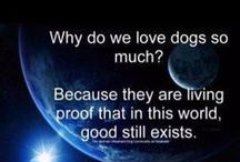 Must Love Dogs / Dogs, dogs, dogs.
