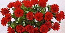 Květinové dekorace / Co Váš domov zútulní a dodá mu šmrnc? Co takhle květinová dekorace? Ať se rozhodnete pro umělé květiny nebo raději vsadíte na ty živé, v obou případech vykouzlíte své domácnosti novou podobu :-)