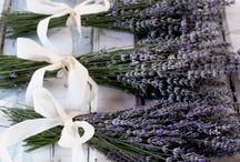 Lavender inspiration!