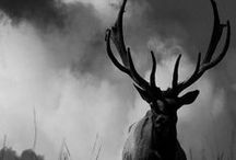 bambi and antler . / for the love of deer, stag, and the beauty of their antler / by fhenny zheng