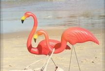 Flaminghi.